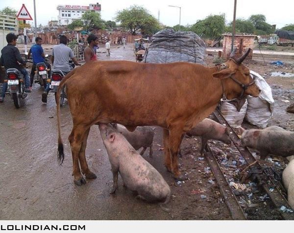 a funny essay on cow Mehru established in the year 1997, is an iso 9001:2008 and iso 14001:2004 certified company, manufacturing instrument transformers upto 420 kv a modest proposal : for preventing the children of poor people in ireland from being aburden to their parents or country, and for making them beneficial funny english essay on cow to the public.
