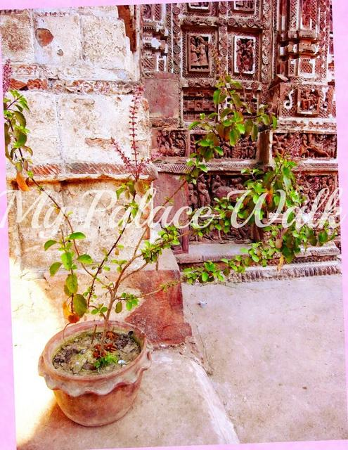 Pot of holy basil (tulsi) in Rajbari temple courtyard, Kalna, West Bengal