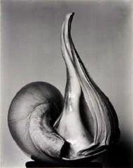 Edward Weston - Shell