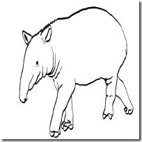 Dibujos De Tapir Para Colorear Jugar Y Colorear