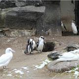 Pinguine und Möwen