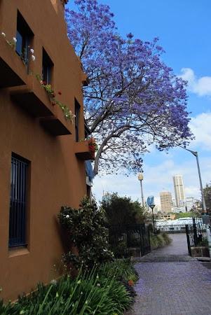 Imagini Australia: Sydney  primii pasi pe strazile din Potts Point