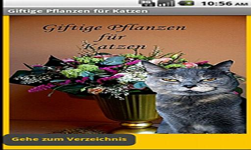 Katzen: Giftige Pflanzen