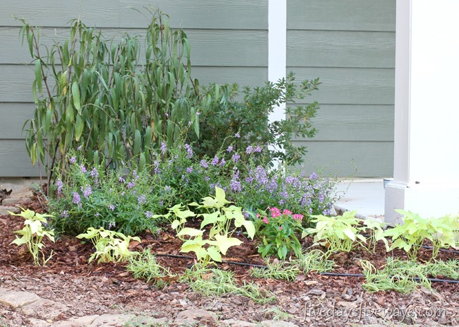 new flower beds 5