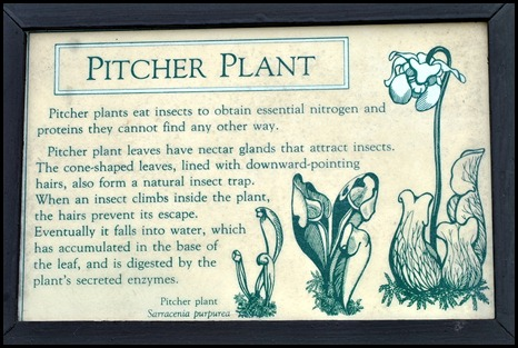 04w7 -  Hike - Pitcher Plant Sign