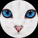 Steve Shephard