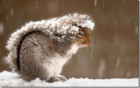 fundal desktop-iarna