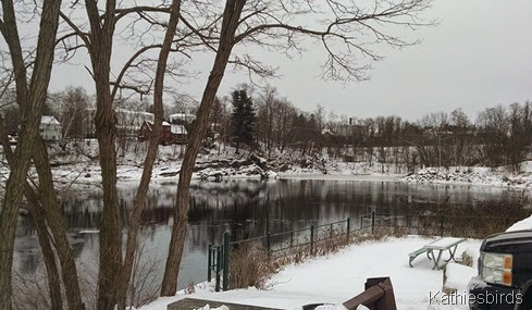 2. A bend in the Androscoggin on Bowdoin Island in Topsham 1-6-15 cell pic