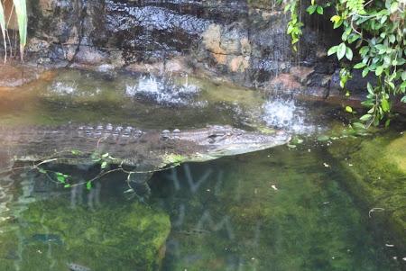 Imagini Australia: Sydney Rex asteapta si el mangaieri