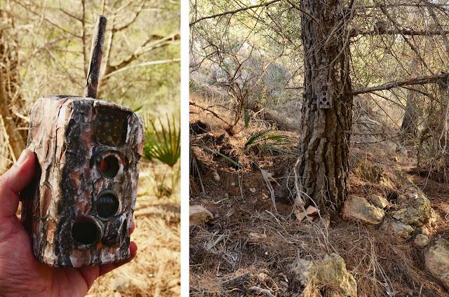 Resultado sobre un pino carrasco