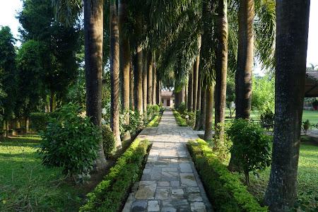 alee umbrita de arbori tropicali