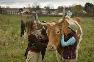 Alison Putnam and Meiko Lunetta tend to Lou, who with partner Bill has become a symbol at Green Mountain College, but they are to be sent to a slaughterhouse.