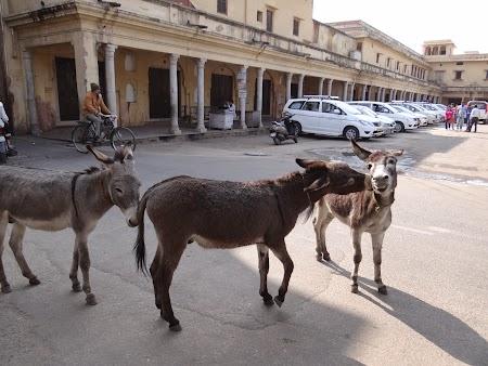 43. Magari prin Jaipur.JPG