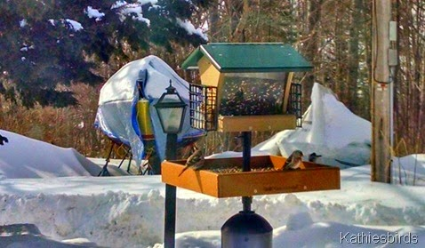 28. birds on feeder 2-24-15-cell pic