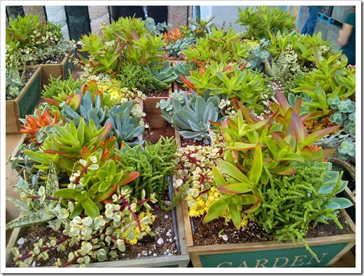 130612_SucculentGarden_Costco_07