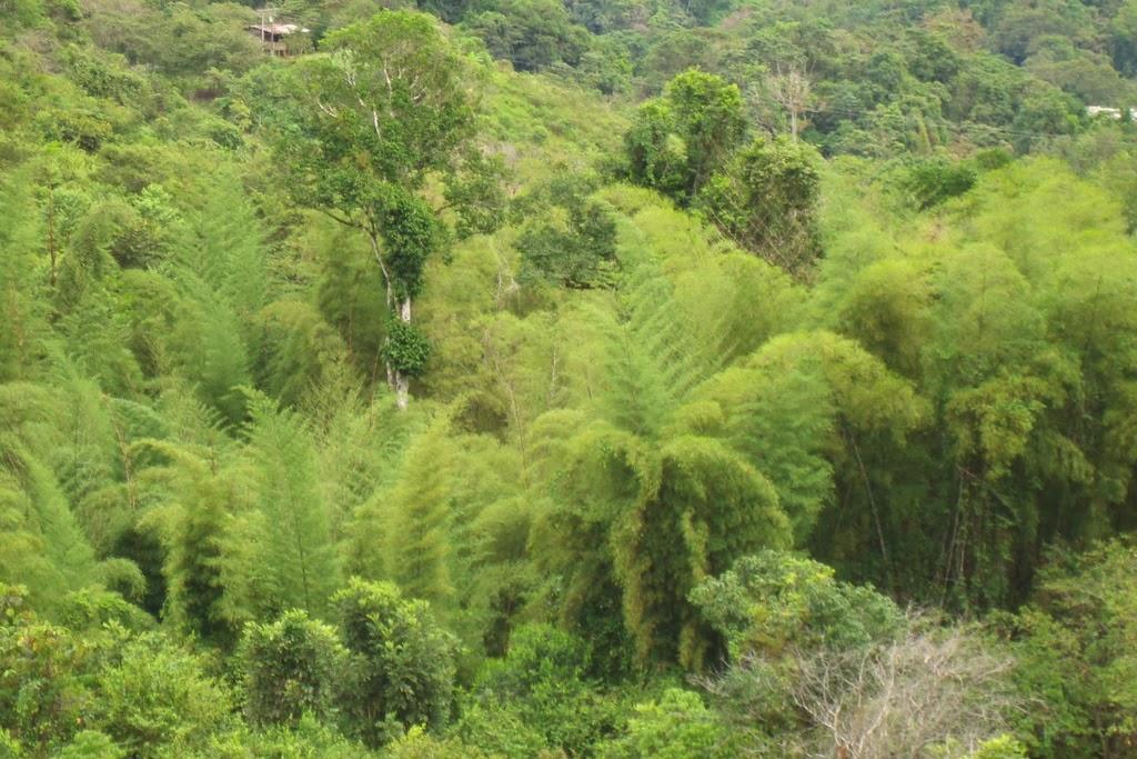 Parque-Bambú-Ecuador