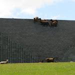 gibbs-farm-lewitt_04.jpg