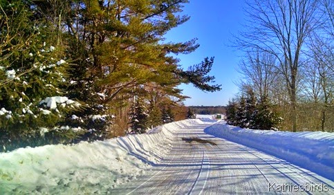 8. road to the boat launch 2-13-15
