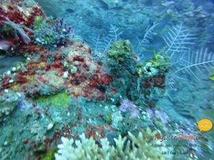 Diving Amed Bali 48
