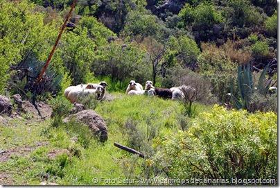 7647 El Aserrador-Paso Herradura(barranco Ayacata)