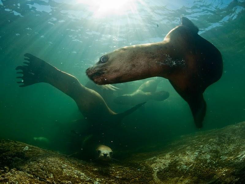 stellar-sea-lions-british-columbia_37922_990x742.jpg