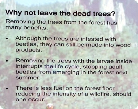 why remove dead trees