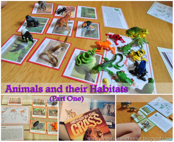 Animals and their Habitats Study