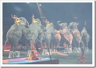 Elepahants at a circus