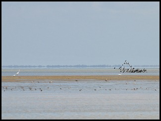 18 - wading birds and cormorants