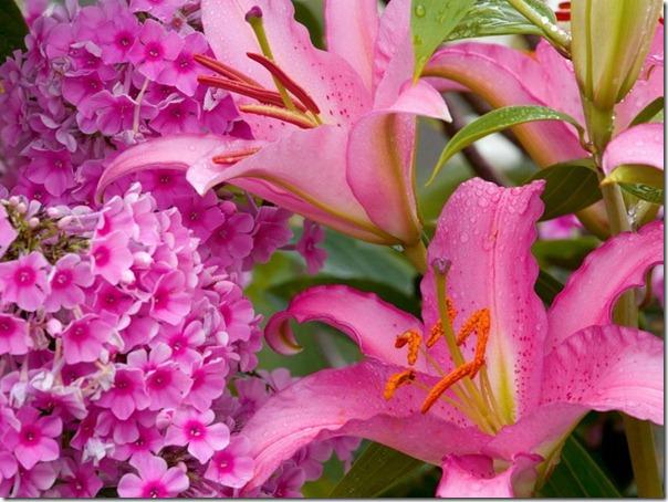 flor día del amor (41)