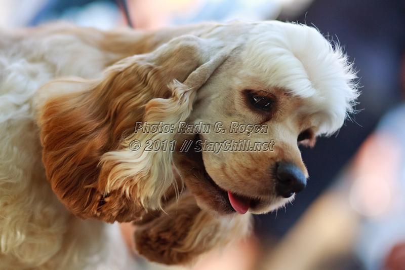 Expozitia canina din data de 11 septembrie 2011 din Cetatea Medievala din Tirgu Mures
