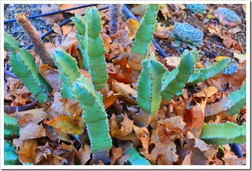 131122_home_leaves_14