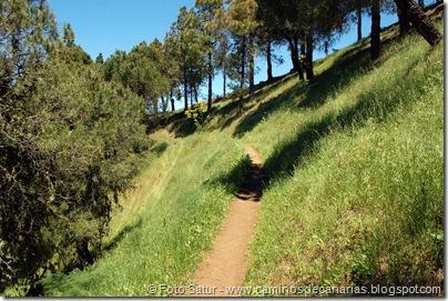 8182 Volcán Hondo Fagajesto(Los Morretes)
