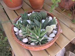 Decorar con cactus una planta con la que no pinchar s for Plantas para interiores segun el feng shui