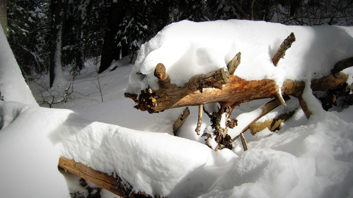 snow-covered log on Elbow Fork Trail in Millcreek Canyon Utah