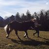 katze_ pferde