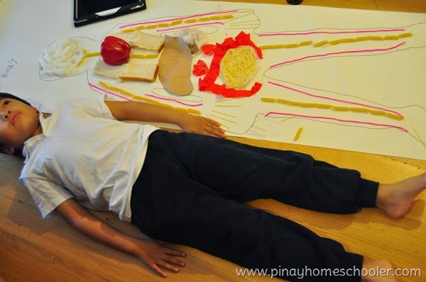 Internal Organs of the Body Study for Kids