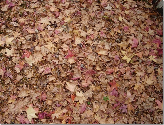 Autumn_Leaves_Texture_by_Nereja