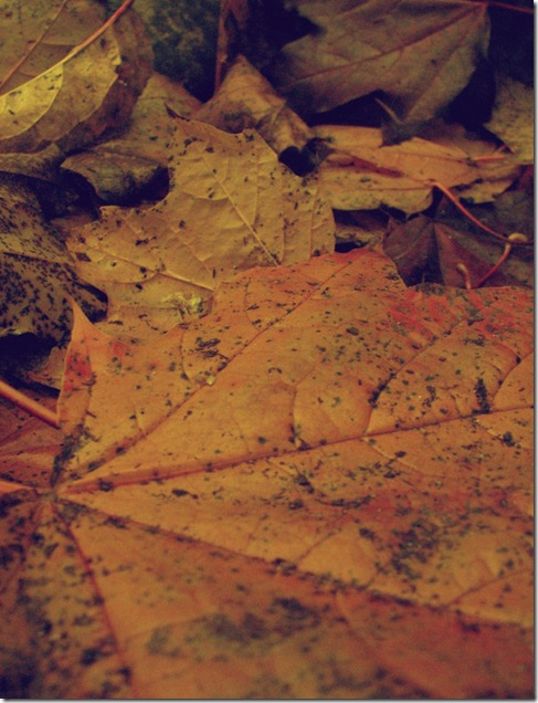 Fallen_Leaves_texture_by_thiselectricheart