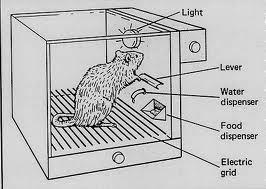 Aqueous Transmission La Caja De Skinner 243 Como Te Hacen
