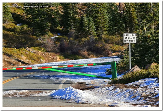 140118_MtShasta_afternoon_bunny_flat_road2