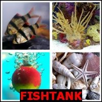 FISHTANK- Whats The Word Answers