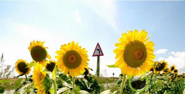 tkp-gila.blogspot.com - 5 Jenis Bunga yang Aman untuk di Makan