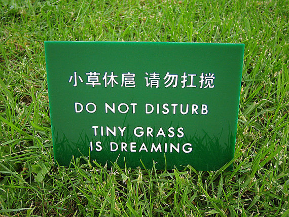 tiny+grass+is+dreaming.jpg