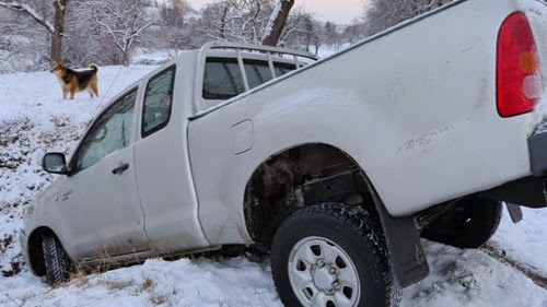 was the dog the driver? pickup truck + ditch + winter = accident