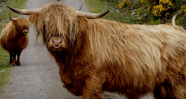 DADDY HAIRY COO
