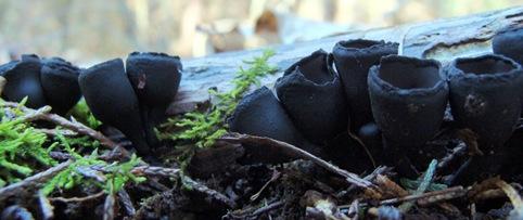 cropped urnulas