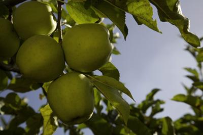 procesarea alimentelor, ditributie selectie, agricultura variata si locala