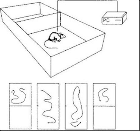 experimento hipocampo