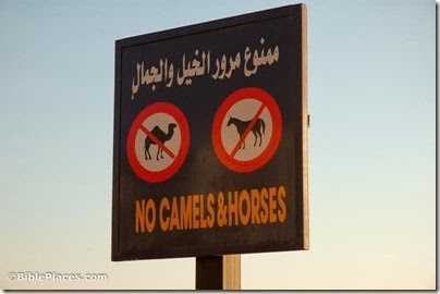 No camels and horses sign in Dahab, tb032606946